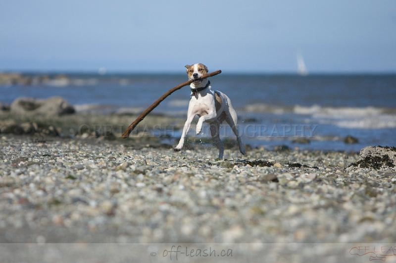 The stick maybe bigger than me but...